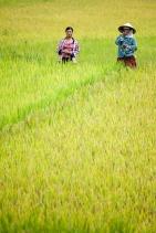 arrozales_bac_ha2_1