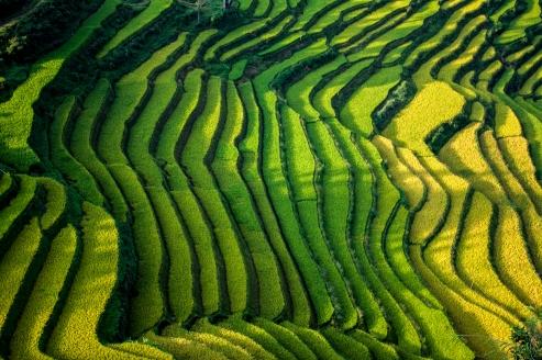 arrozales_bac_ha_4